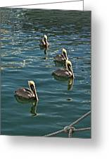 Pelicans On The Water In Key West Greeting Card