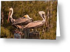 Pelicans On Watch Greeting Card