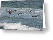 Pelicans Over The Water Greeting Card