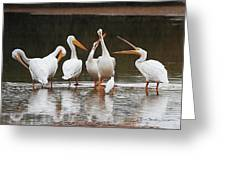 Pelicans Singing Auld Lang Syne Greeting Card