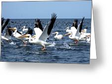 Pelicans Taking Flight Greeting Card