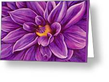 Pencil Dahlia Greeting Card
