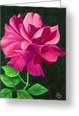 Pencil Rose Greeting Card