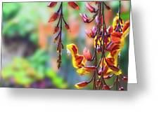Pending Flowers Greeting Card