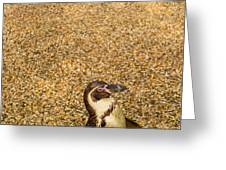 Penguin And Pebbles Greeting Card