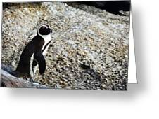 Penguin Chilling On Rock At Boulders Beach Cape Town  Greeting Card