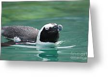 Penguin Gliding On Water's Surface Greeting Card