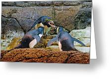 Penguin Talk Greeting Card