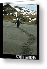 Penguin Travel Poster Greeting Card
