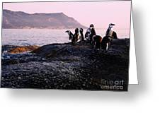 Penguins Mountain Boulders Beach Cape Town Greeting Card