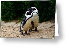 Penguins On Beach At Boulders Beach Cape Town Greeting Card
