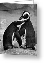 Penguin's Preening Black And White Greeting Card