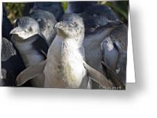 Penguins Greeting Card by Steven Ralser