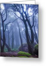 Peninha Magical Forrest In Sintra Portugal Greeting Card