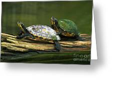 Peninsula Cooter Turtles Greeting Card