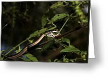 Peninsula Ribbon Snake Greeting Card by April Wietrecki Green