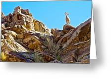 Peninsular Bighorn Sheep From Borrego Palm Canyon Trail In Anza-borrego Desert Sp-ca Greeting Card