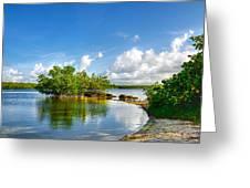 Pennekamp Mangrove Greeting Card