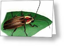 Pennsylvania Firefly Greeting Card