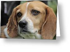 The Beagle Named Penny Greeting Card