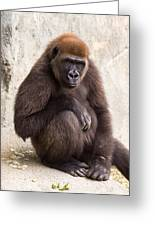 Pensive Gorilla Greeting Card