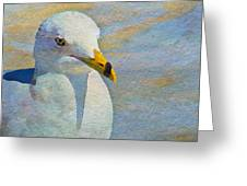Pensive Seagull Greeting Card