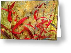 Penstemon Abstract 4 Greeting Card