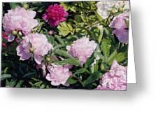 Peonies In Pinks Greeting Card