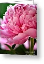 Peonies In The Pink Greeting Card