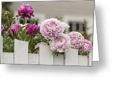 Peonies On A Picket Greeting Card