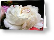 Peony Addiction Greeting Card