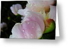 Peony Blossom After A Rain Greeting Card
