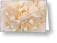 Peony Close-up In Peach Greeting Card