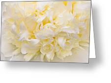 Peony Close-up In Yellow Greeting Card