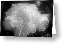 Peony Flower Phases Black And White Contrast Greeting Card