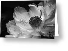 Peony Glory Greeting Card by Terry Rowe