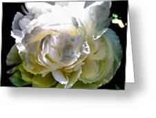 Peony In Morning Sun Greeting Card