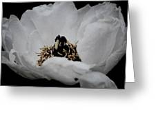 Peony Lovely Greeting Card