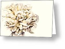 Peony Greeting Card