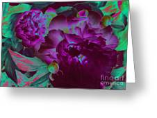 Peony Passion Greeting Card