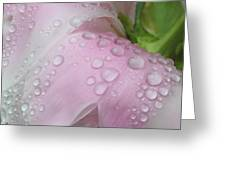 Peony Tears Greeting Card