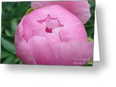 Peony Unveiling Greeting Card