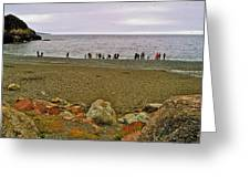 People Lined Up To Catch Capelin On The Shore Of Middle Cove-nl Greeting Card