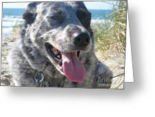Pepper At The Beach Greeting Card