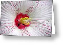 Peppermint Flame 04 Greeting Card