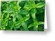 Peppermint Greeting Card