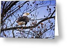 Perched Bald Eagle Greeting Card