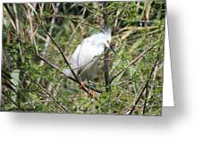 Perched Egret Greeting Card