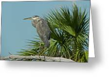 Perched Heron Greeting Card