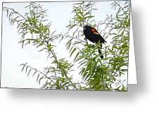 Perched In A Tree Greeting Card